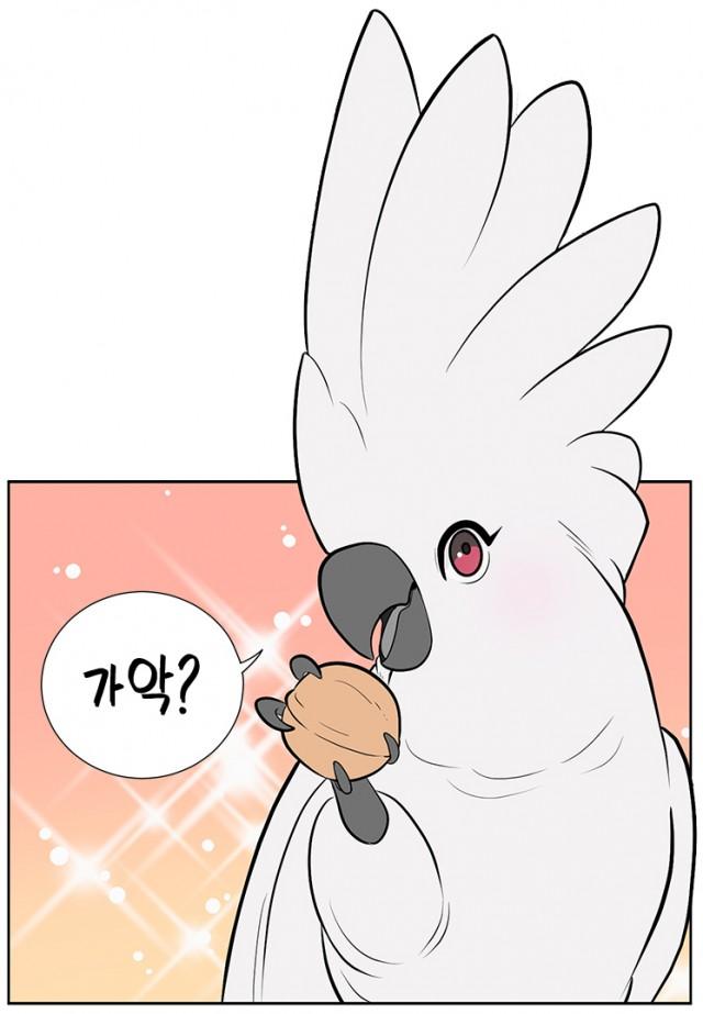 그녀의 앵무새_호두.jpg