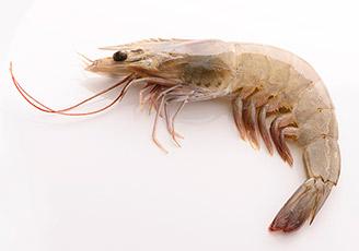 [허리] 나쁜 자세로 일하다가 진짜 새우가 된 썰 | 출처 : 굿닥